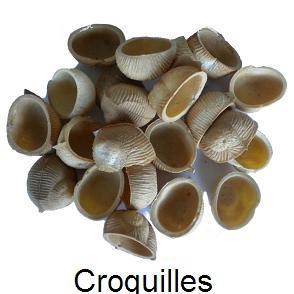 croquilles-vrac